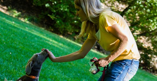 New Video: The Puppy Steps Training Program Breakdown