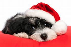 Bring Your New Christmas Puppy To Us For Training!