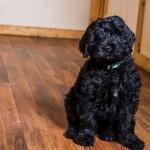 puppy1-4