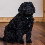 puppy1-7