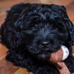 puppy2-1