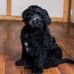 puppy2-12