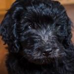 puppy2-17