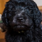 puppy2-18