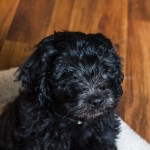 puppy2-6