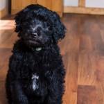 puppy2-8