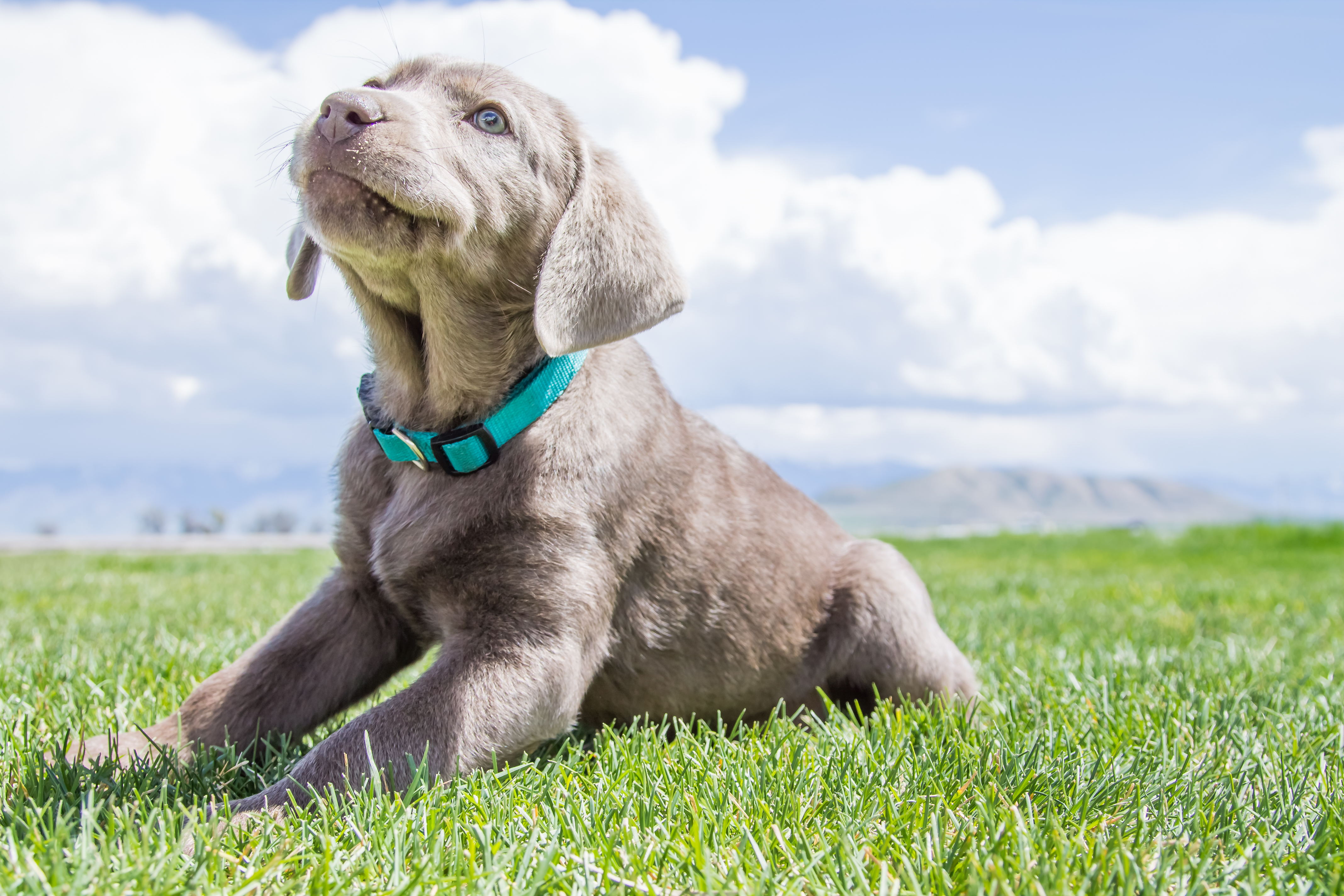 New Video: Take An Exclusive Inside Look Into Puppy Steps Training